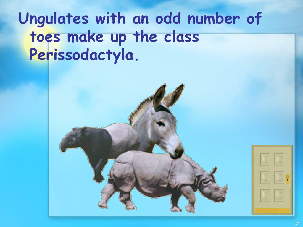 Ungulates with an odd number of toes make up the class Perissodactyla.