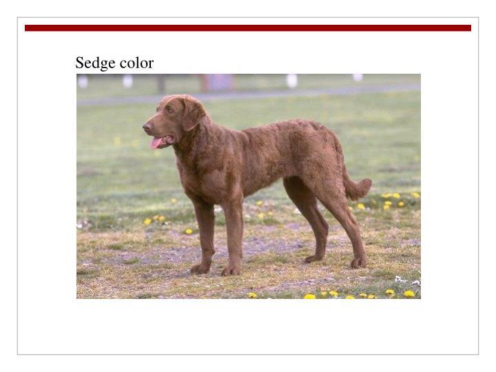 Sedge color