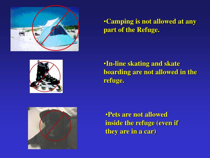 Camping is not allowed at any part of the Refuge.