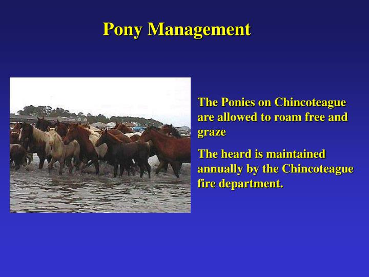 Pony Management