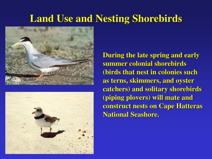 Land Use and Nesting Shorebirds