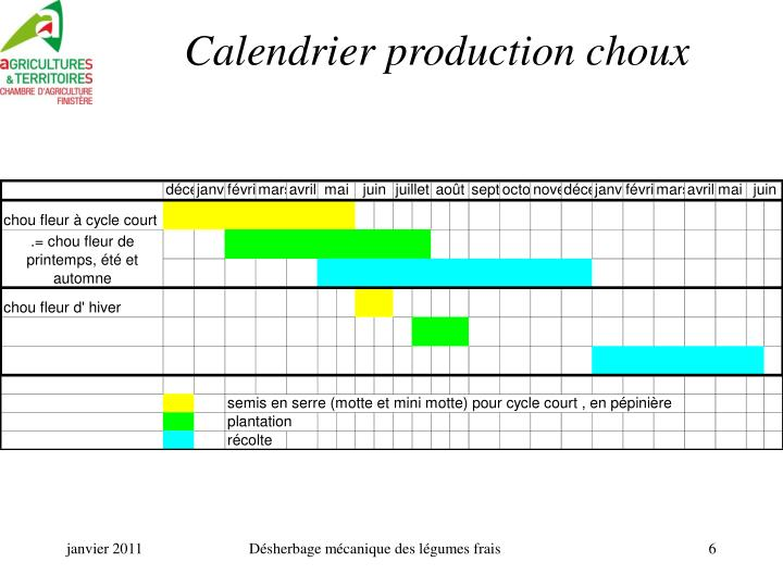 Calendrier production choux
