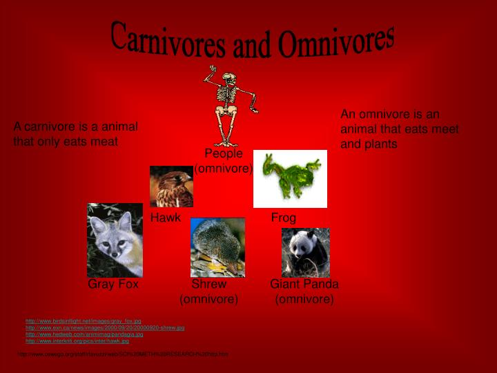 Carnivores and Omnivores