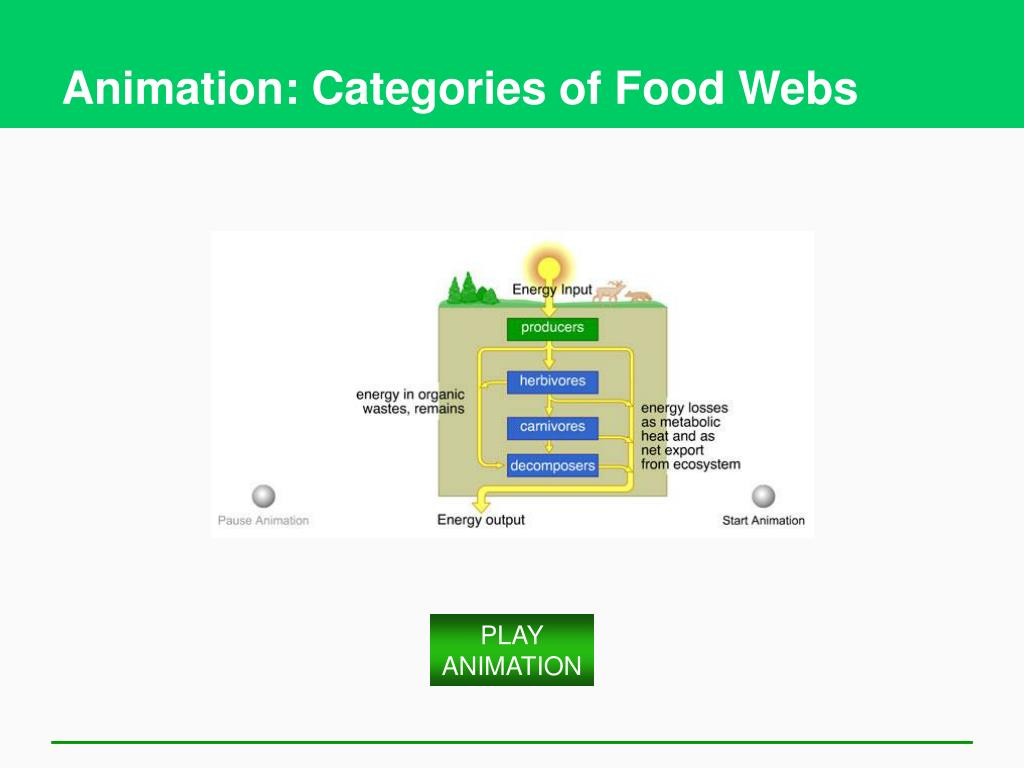 Animation: Categories of Food Webs