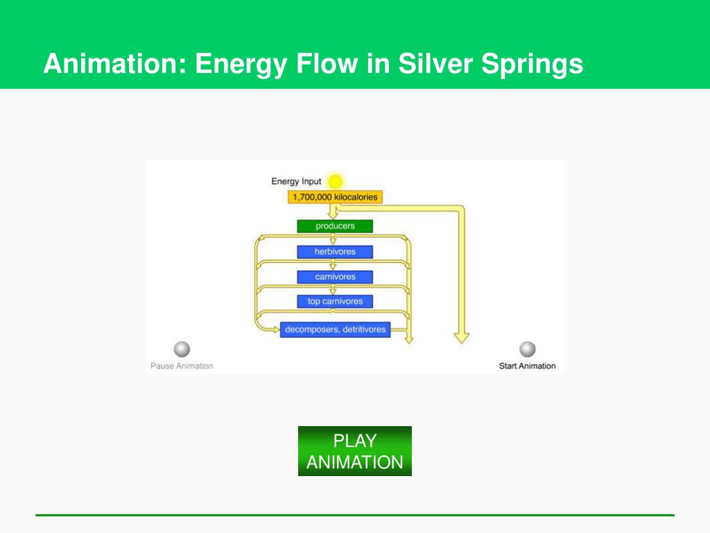 Animation: Energy Flow in Silver Springs