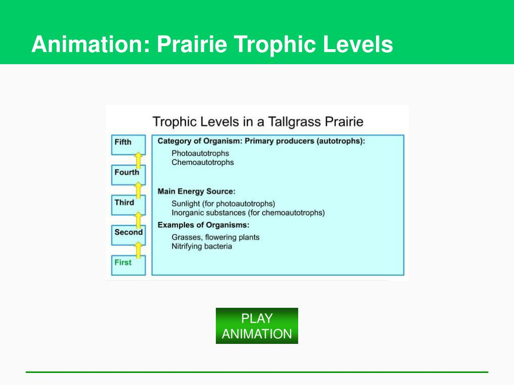 Animation: Prairie Trophic Levels