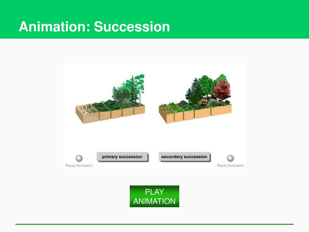 Animation: Succession