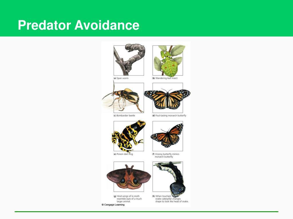 Predator Avoidance