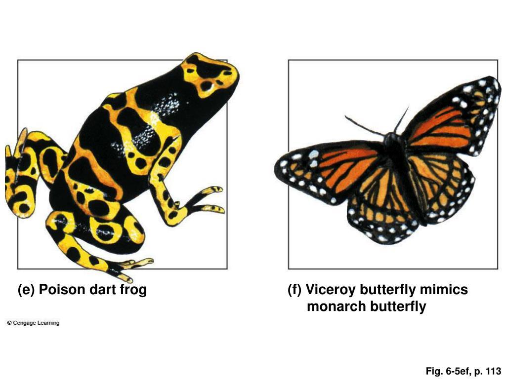 (e) Poison dart frog
