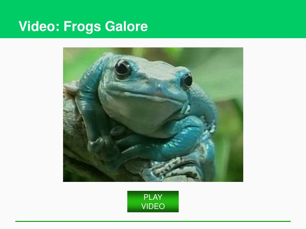 Video: Frogs Galore