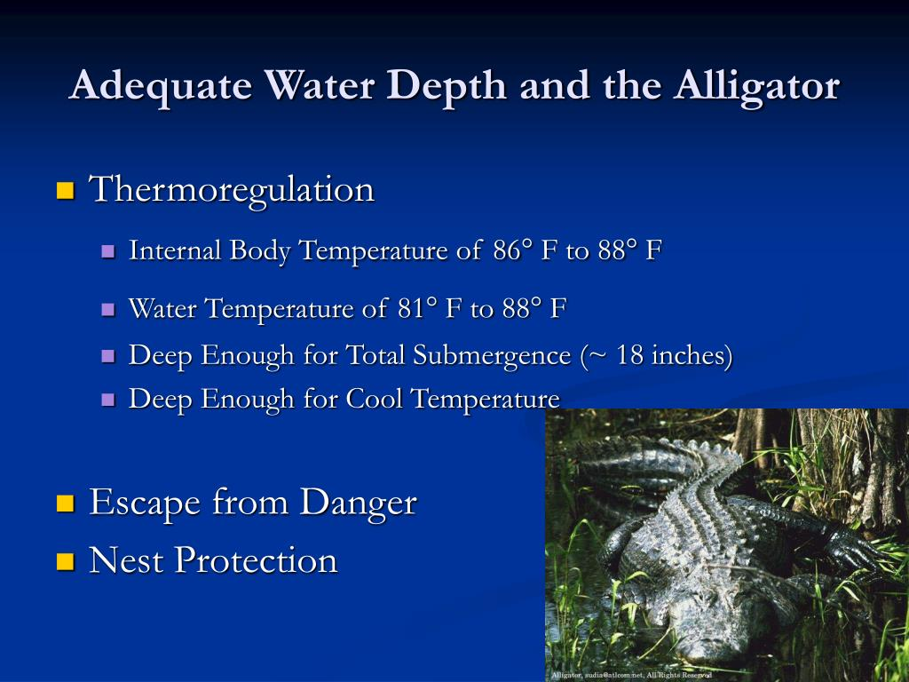 Adequate Water Depth and the Alligator