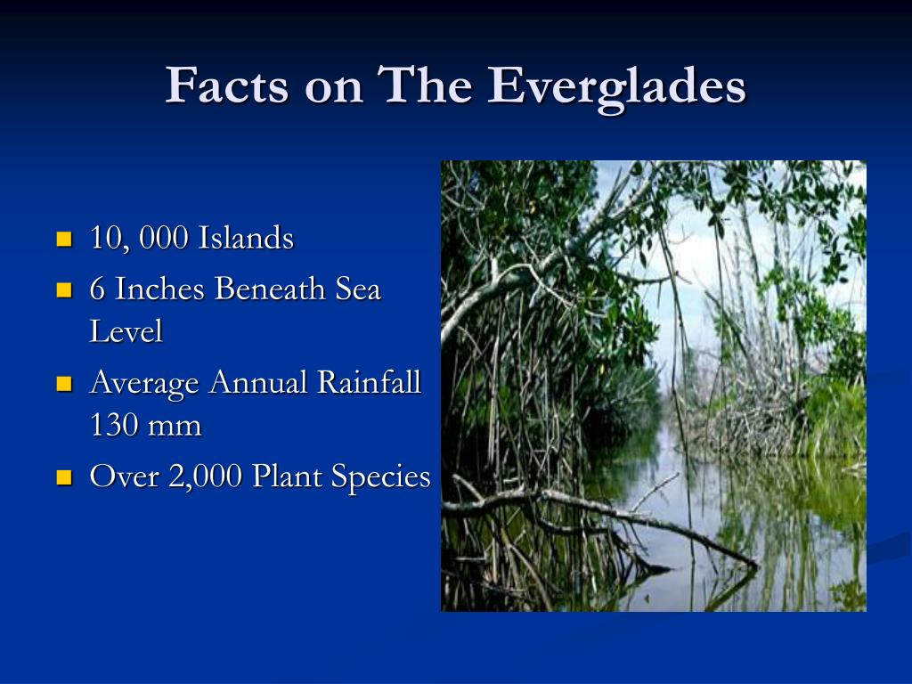Facts on The Everglades