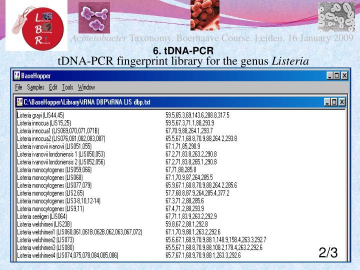 6. tDNA-PCR
