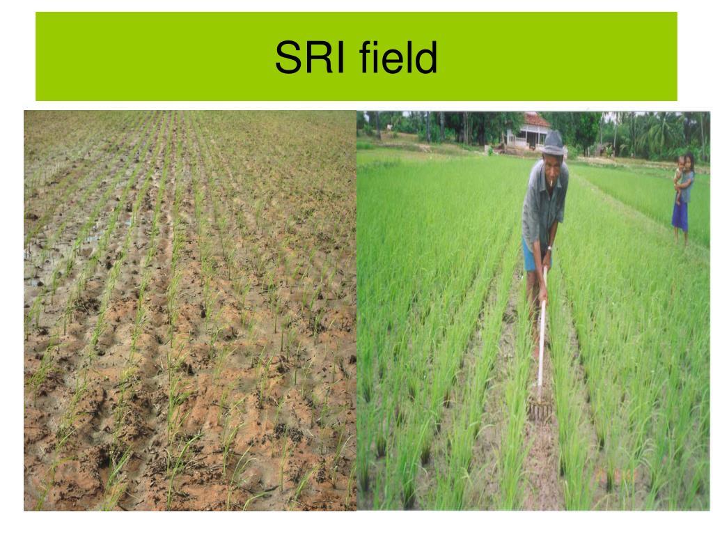SRI field