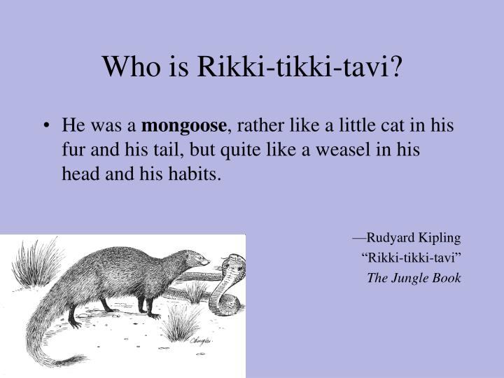 Who is Rikki-tikki-tavi?