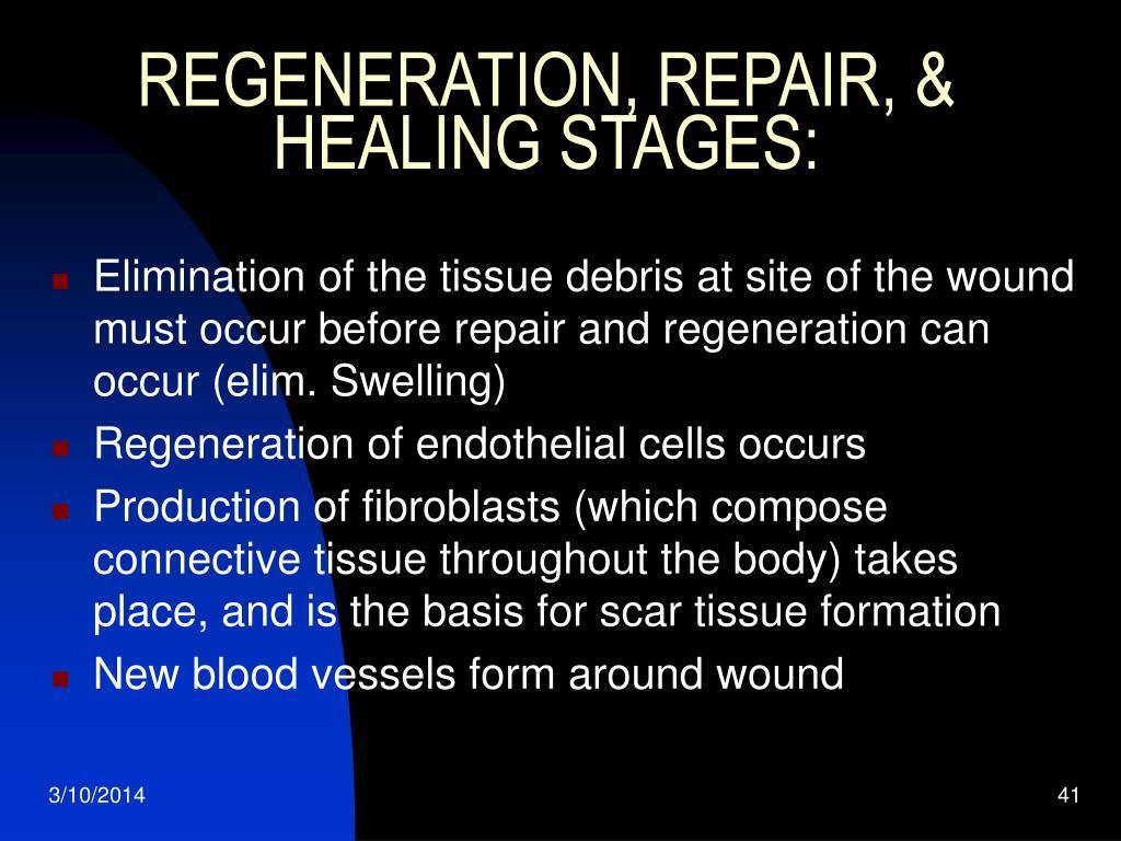 REGENERATION, REPAIR, & HEALING STAGES: