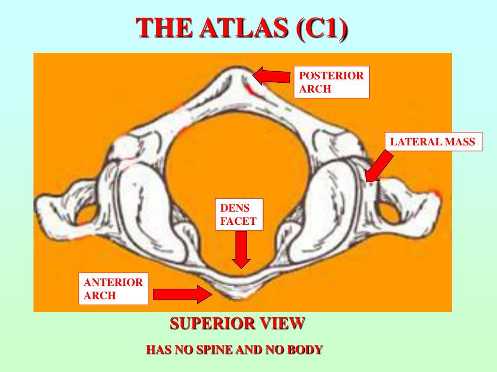 THE ATLAS (C1)