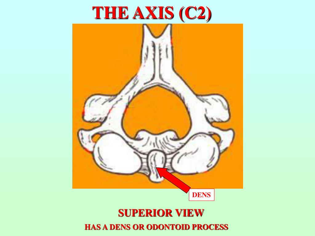 THE AXIS (C2)