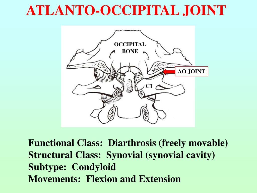 ATLANTO-OCCIPITAL JOINT