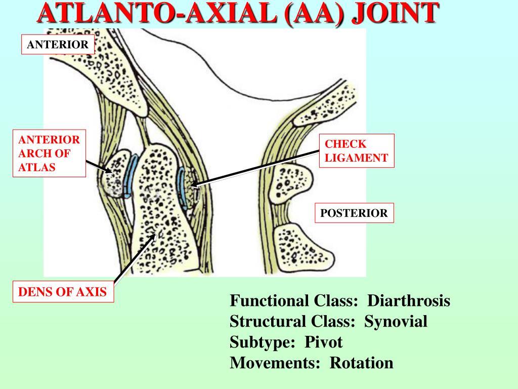 ATLANTO-AXIAL (AA) JOINT