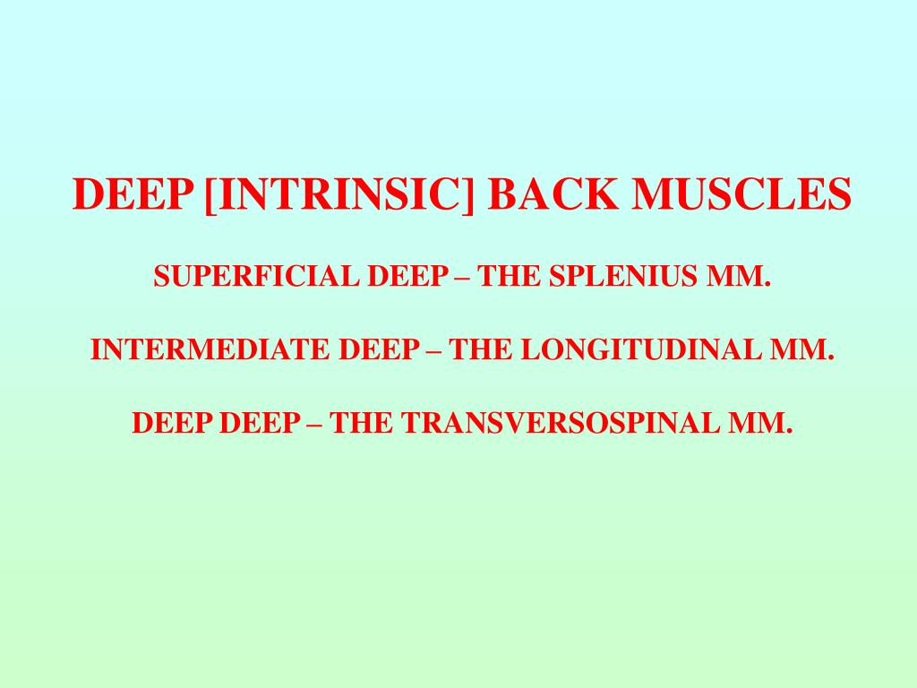 DEEP [INTRINSIC] BACK MUSCLES