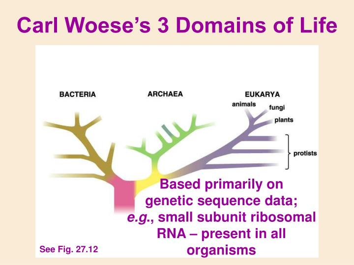 Carl Woese's 3 Domains of Life