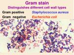 gram stain distinguishes different cell wall types