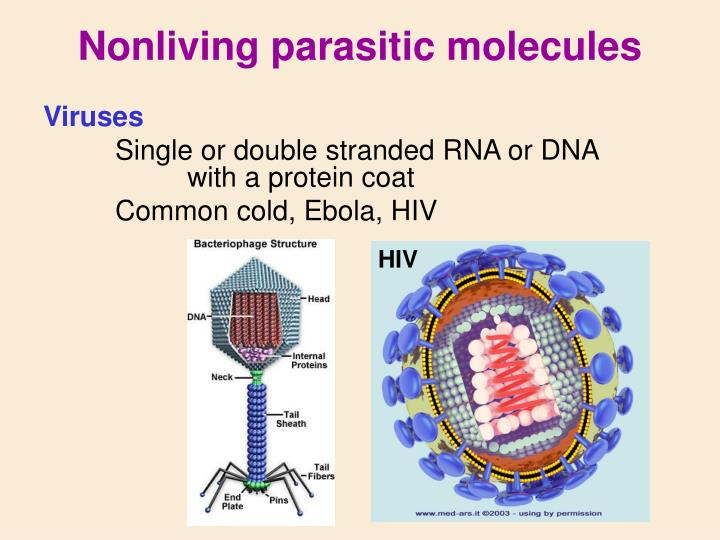 Nonliving parasitic molecules