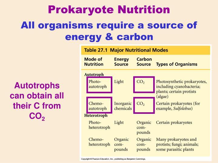 Prokaryote Nutrition