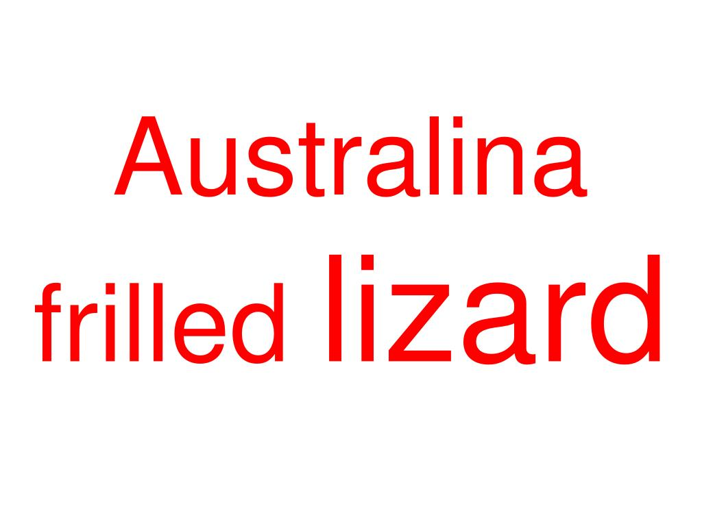 Australina frilled