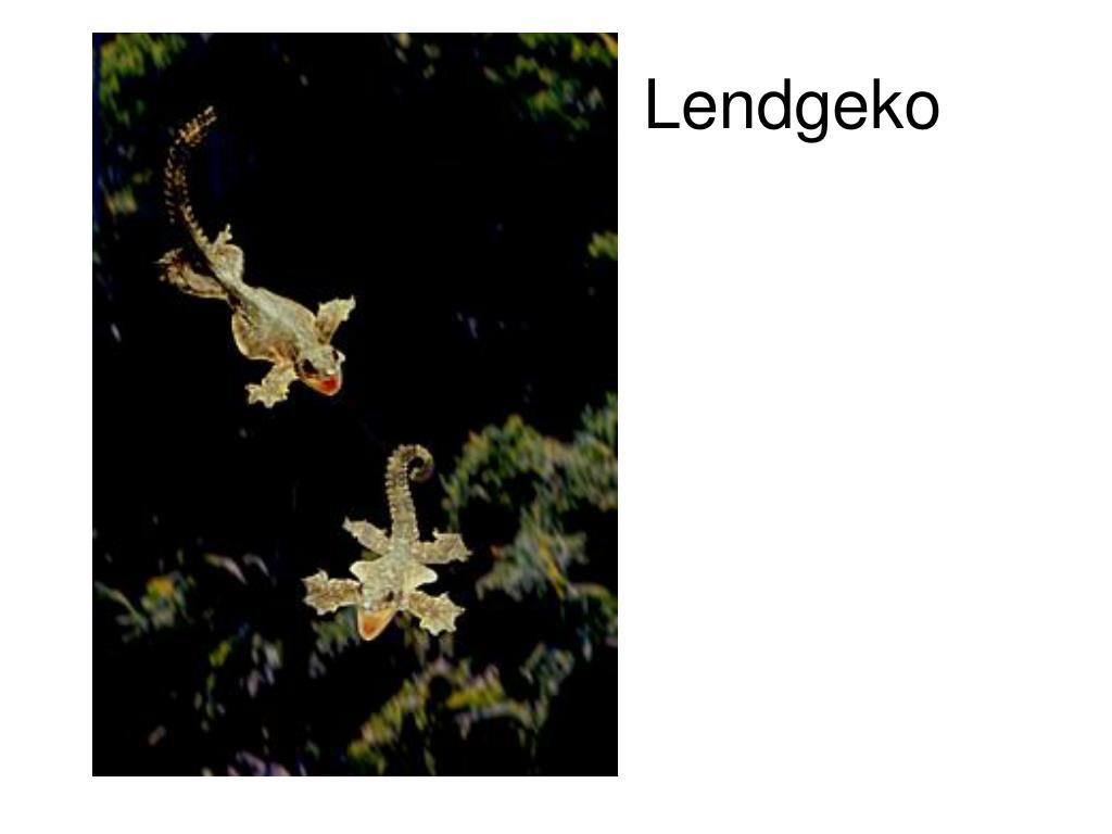 Lendgeko