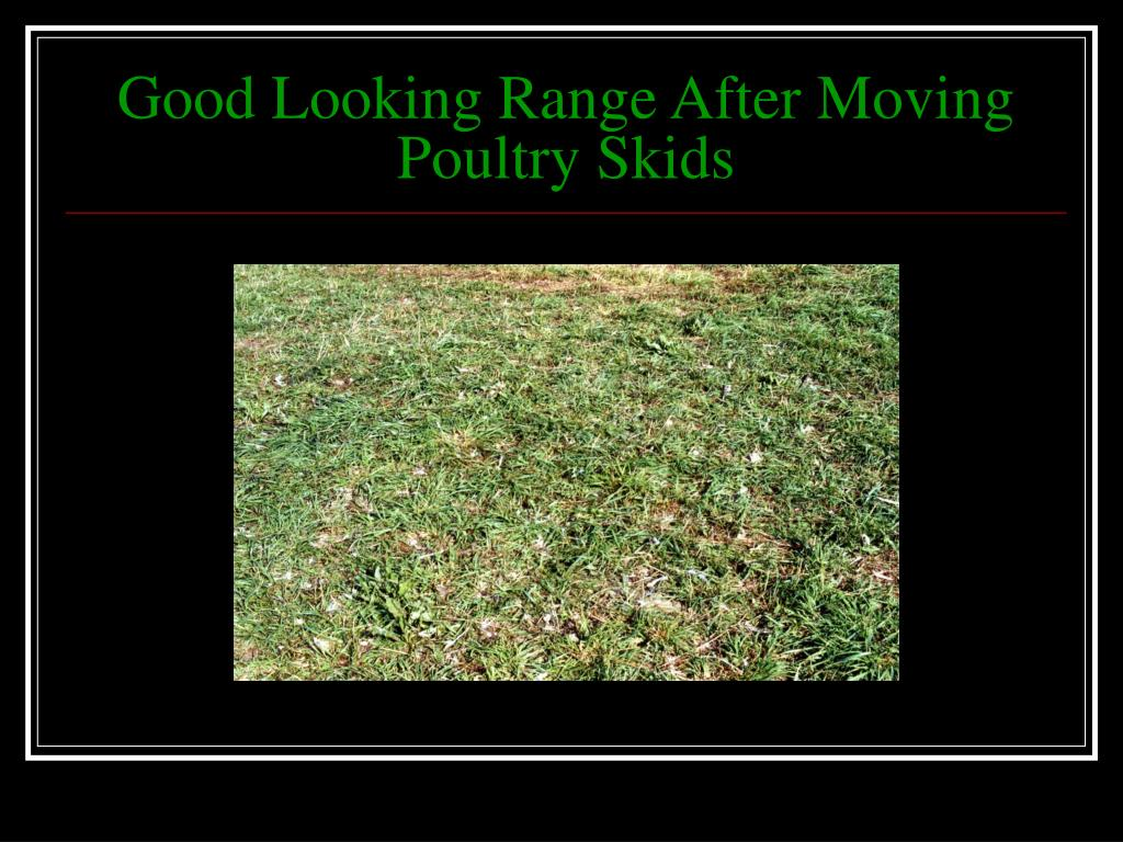 Good Looking Range After Moving Poultry Skids