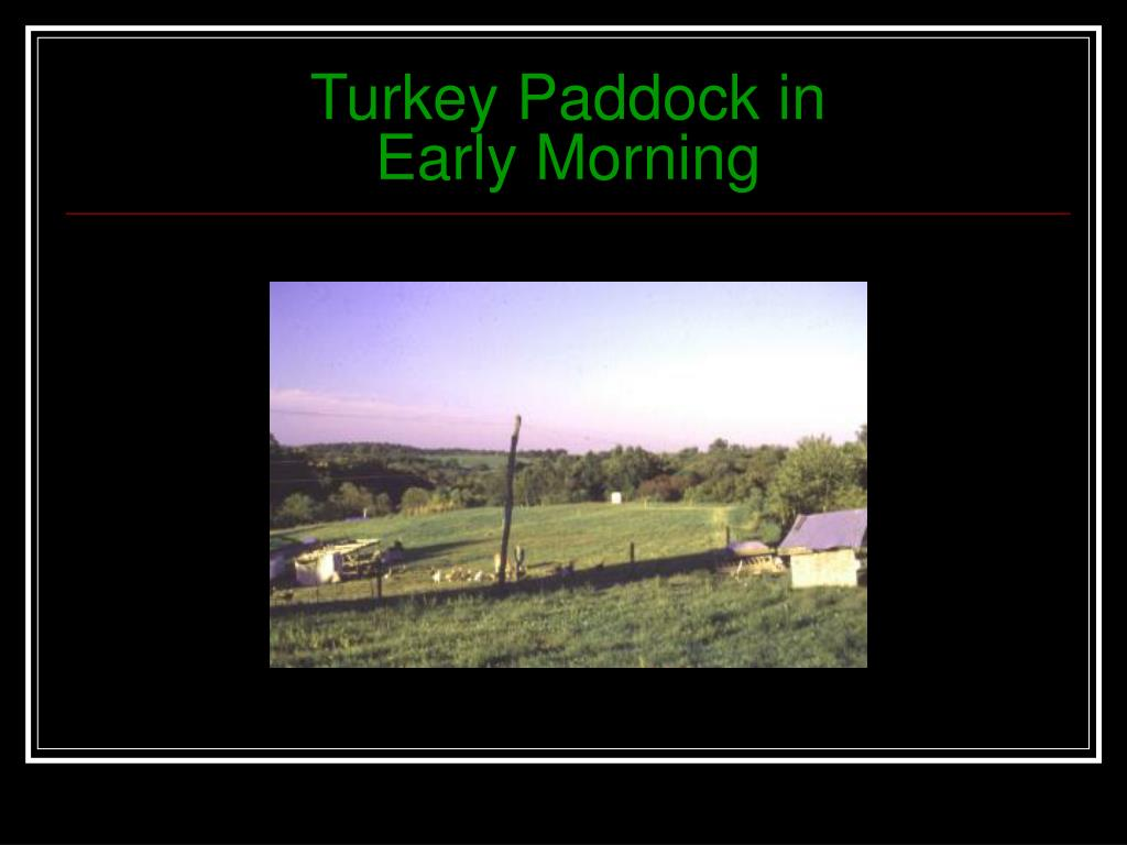 Turkey Paddock in