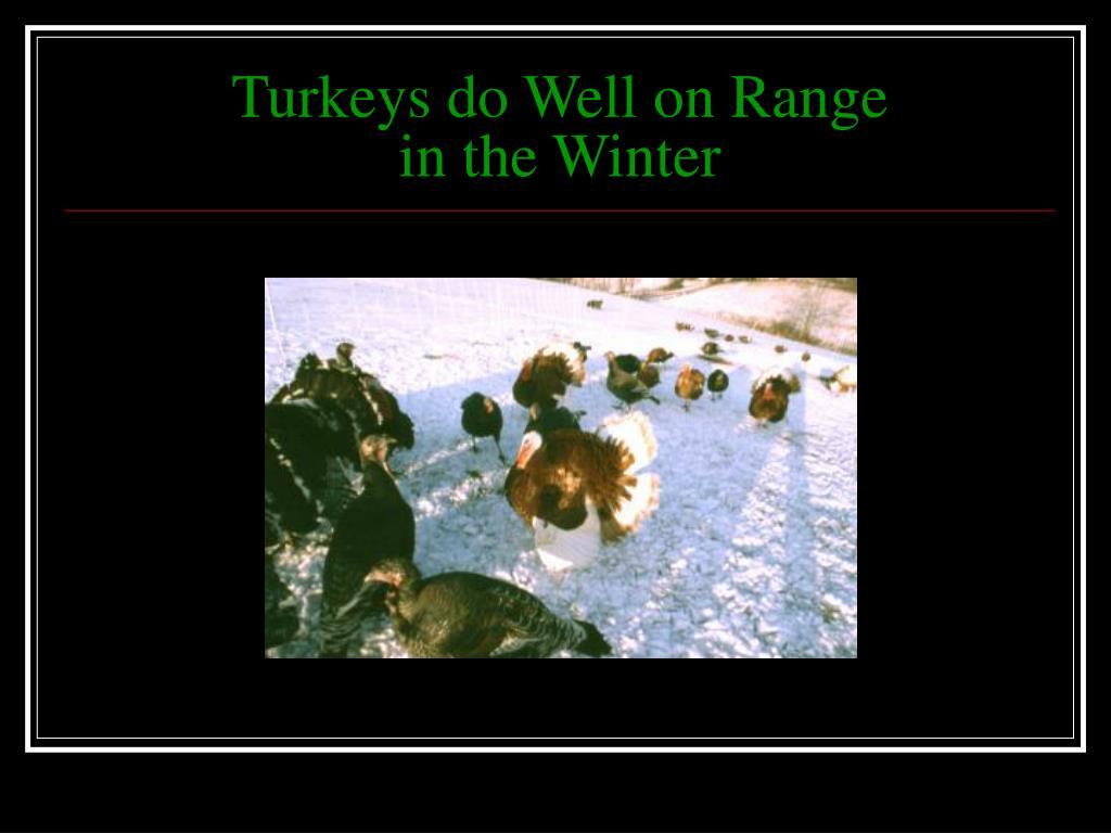 Turkeys do Well on Range