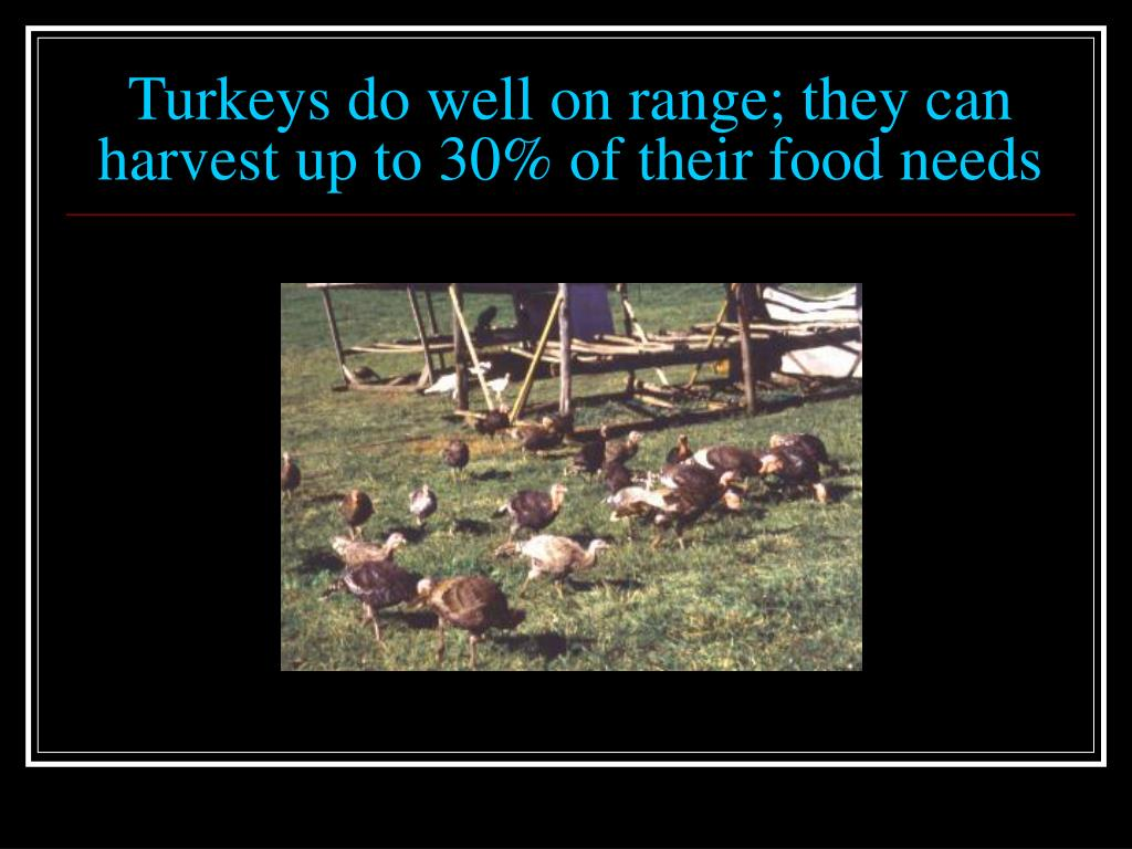 Turkeys do well on range; they can harvest up to 30% of their food needs