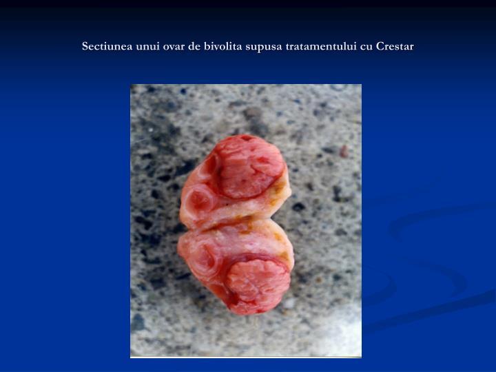 Sectiunea unui ovar de bivolita supusa tratamentului cu Crestar