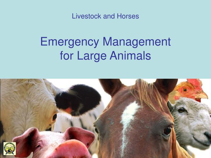 Livestock and horses emergency management for large animals
