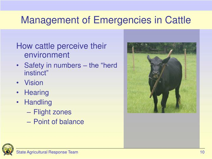 Management of Emergencies in Cattle