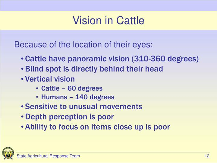 Vision in Cattle