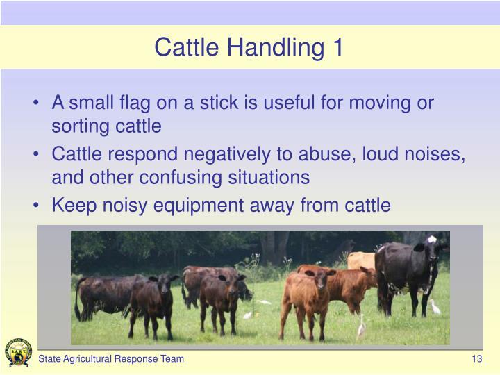 Cattle Handling 1