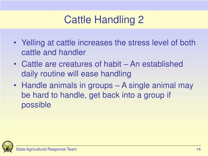 Cattle Handling 2
