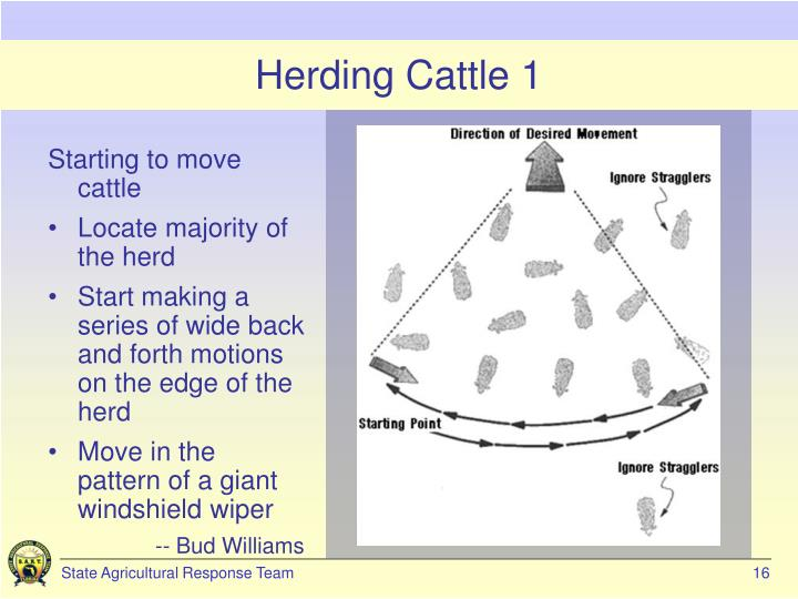 Herding Cattle 1