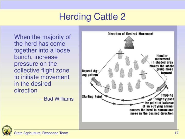 Herding Cattle 2