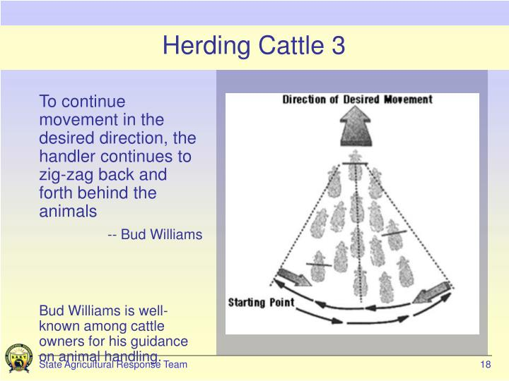 Herding Cattle 3