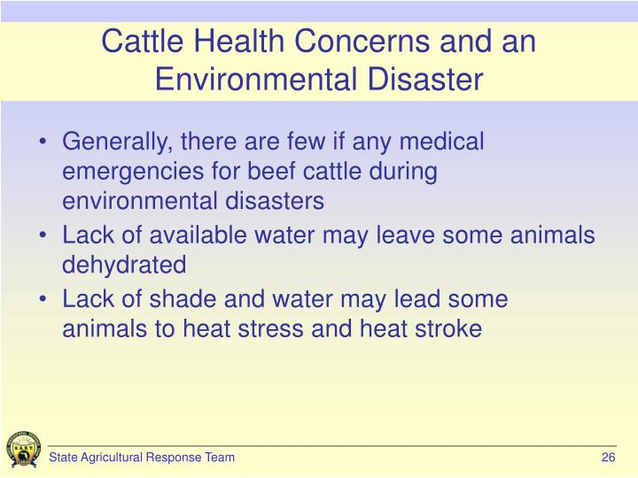 Cattle Health Concerns and an Environmental Disaster