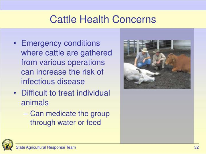 Cattle Health Concerns
