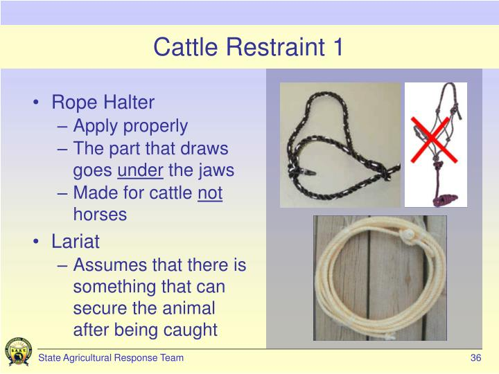 Cattle Restraint 1