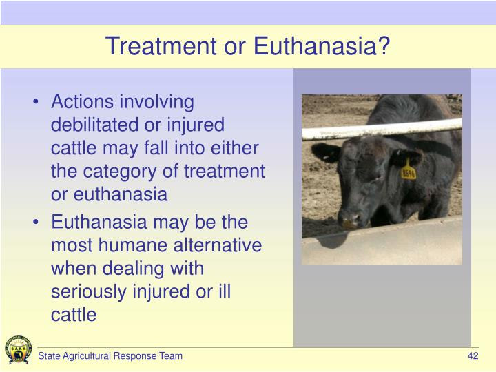 Treatment or Euthanasia?