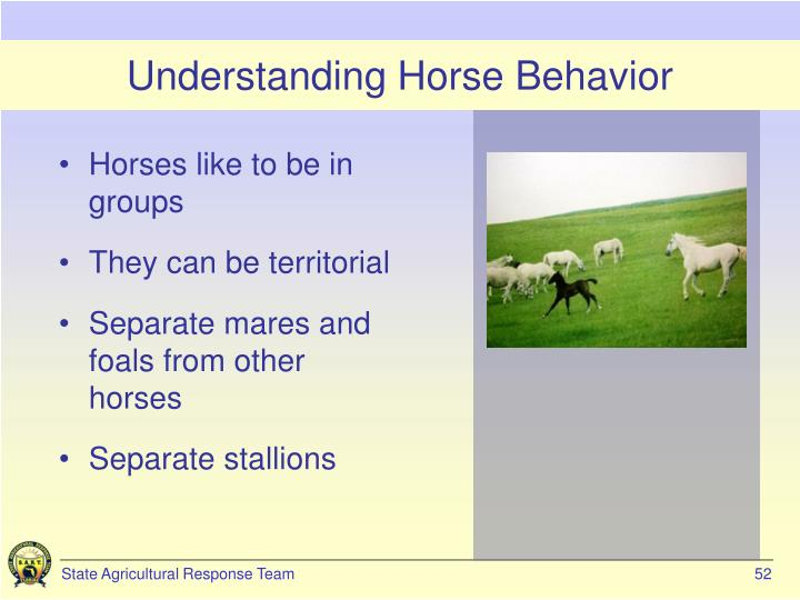 Understanding Horse Behavior