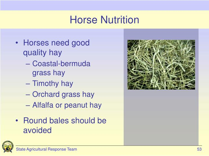 Horse Nutrition